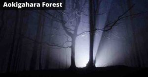 Aokigahara Haunted Suicide Forest Horror Story Hindi