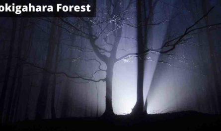 Aokigahara The Haunted Suicide Forest