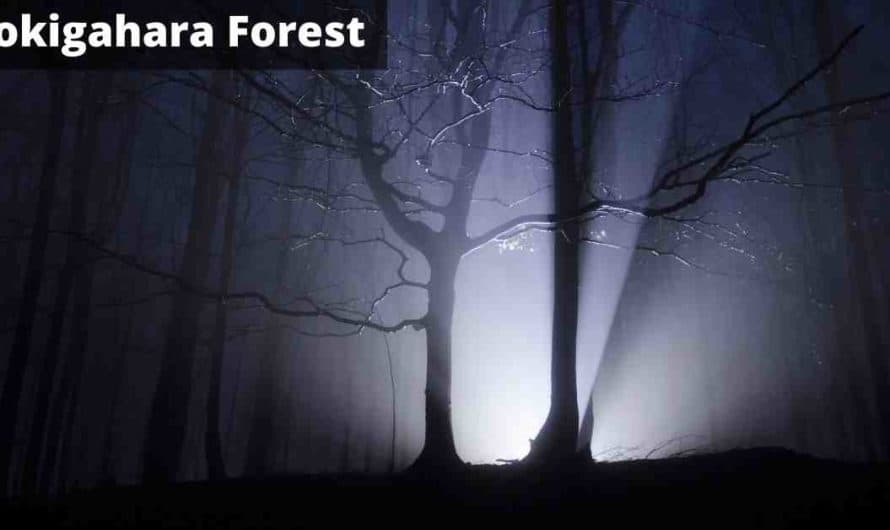 Aokigahara the Haunted Suicide Forest – Horror Story Hindi
